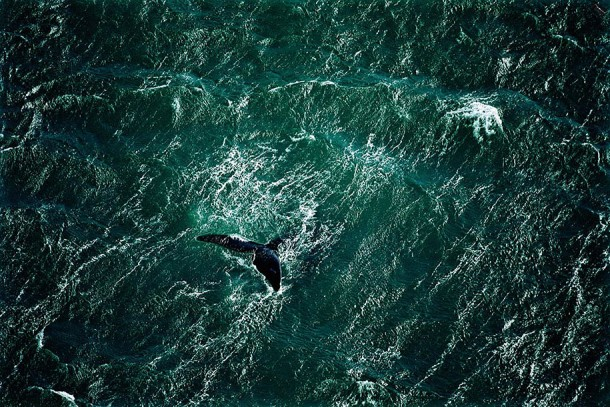 14. Whale Off the Valdés Peninsula, Argentina