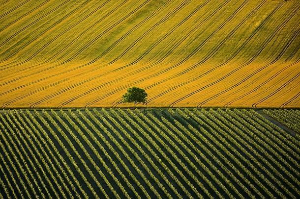15. Agricultural Landscape Near Cognac, Charente, France