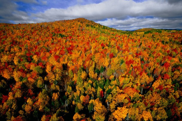 2. Autumn Forest in the Region of Charlevoix, Quebec, Canada