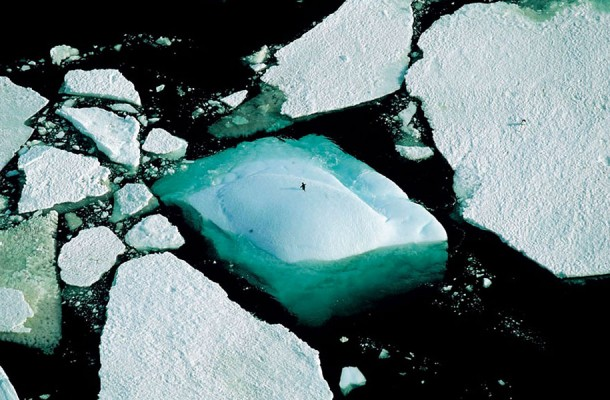 26. Icebergs and an Adelie Penguin, Adelie Land, Antarctica