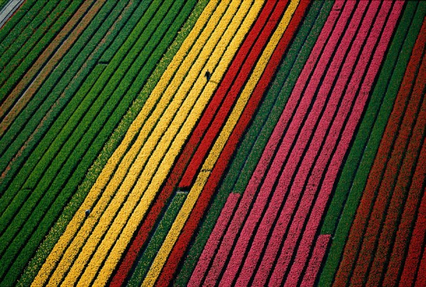 3. Fields of Tulips, Near Amsterdam, Netherlands