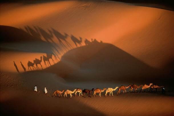 6. Dromedary Caravan Near Nouakchott, Mauritania