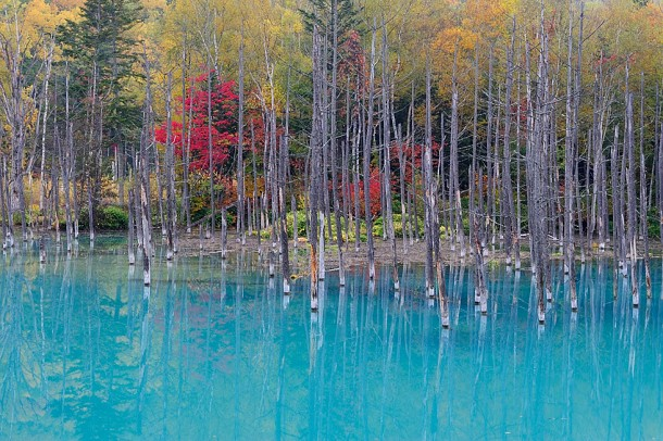Color Changing Pond – Land of the Rising Sun 3