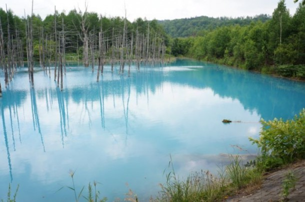 Color Changing Pond – Land of the Rising Sun 4