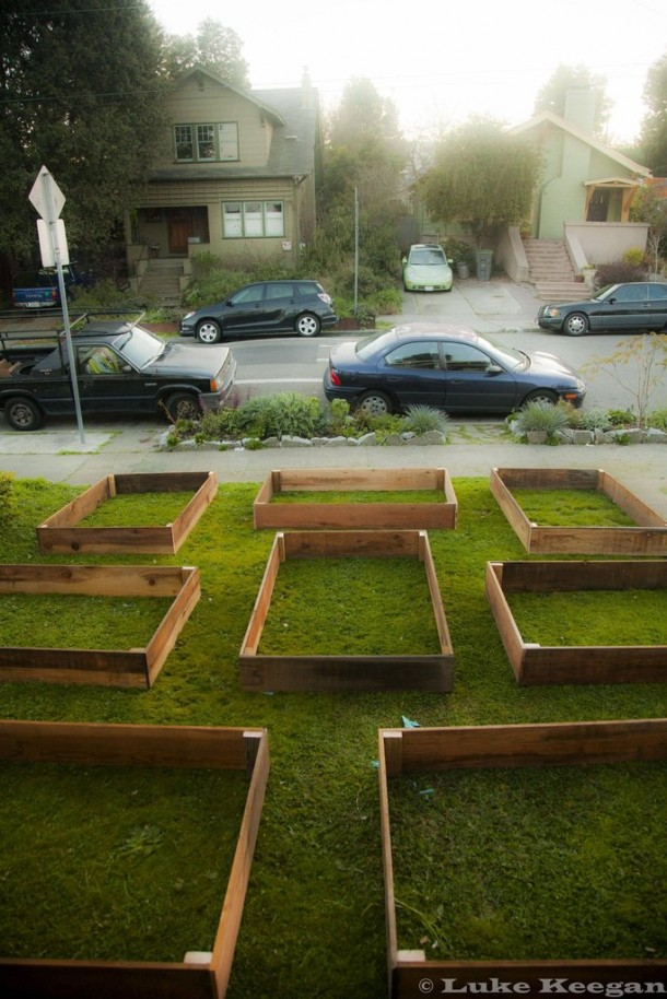 Transform your Lawn 4