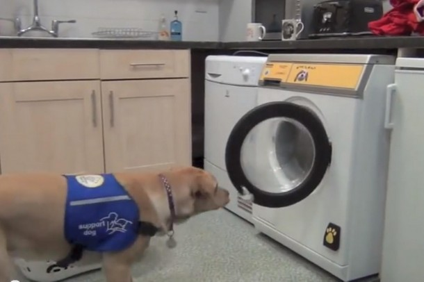 Woof – Wash - Chill 4