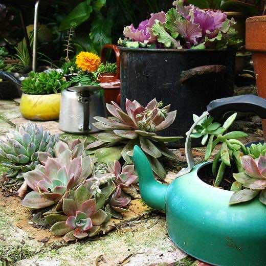 kettle flower pot
