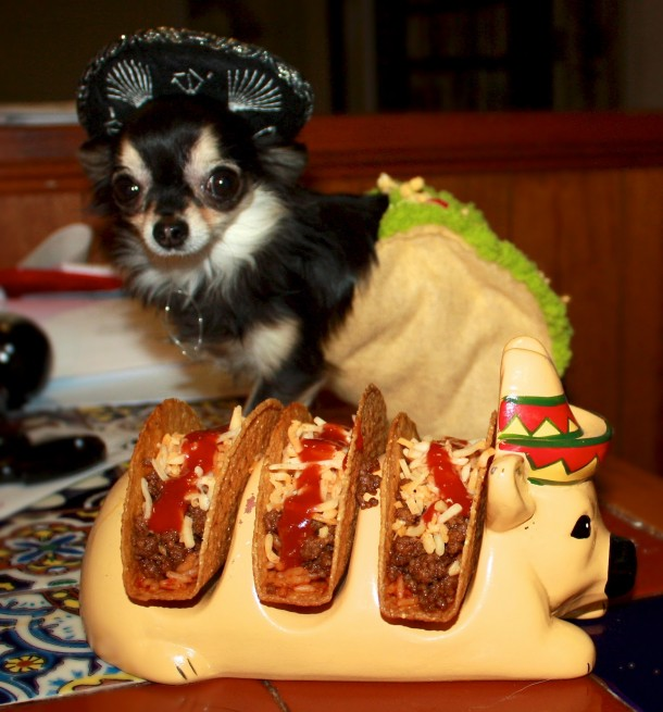 19. Chihuahua Taco Holder