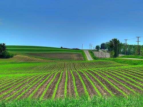crop_field