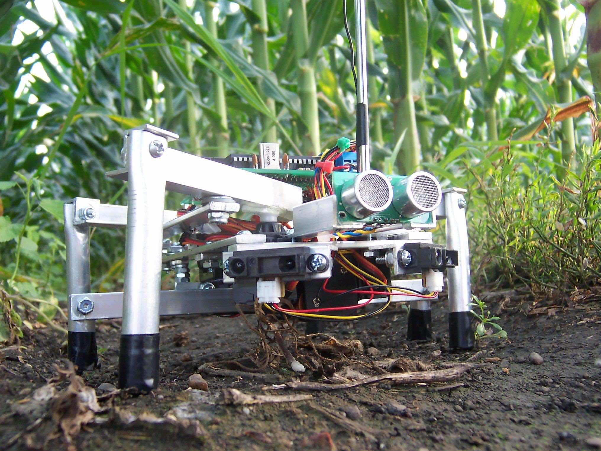 Robots at farm 2
