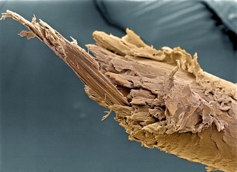Microscopic Images-10
