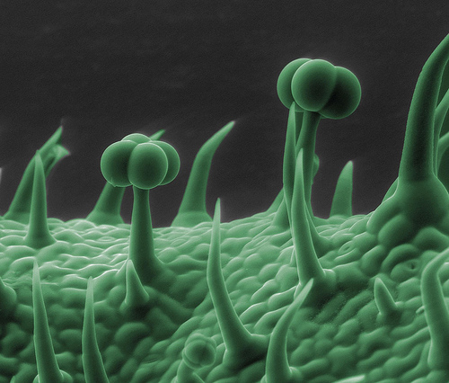 Microscopic Images-28