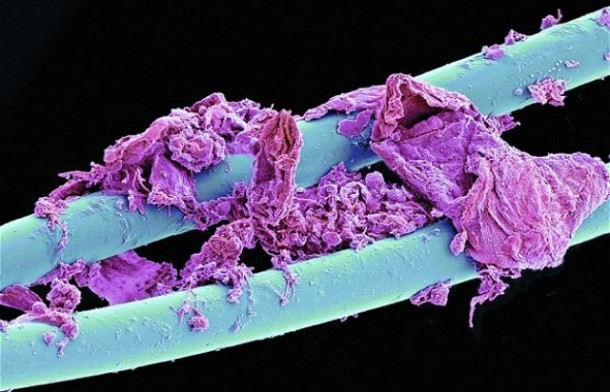 Microscopic Images-4