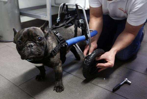 handicapped_animals (13)