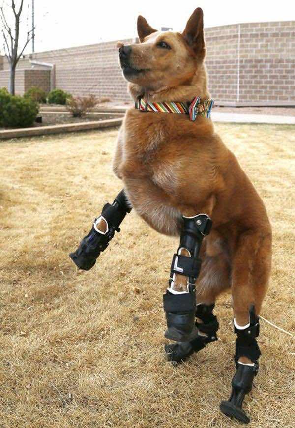handicapped_animals (3)