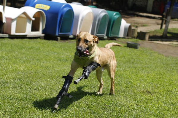 handicapped_animals (8)