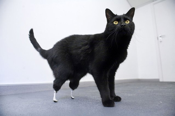 handicapped_animals (9)