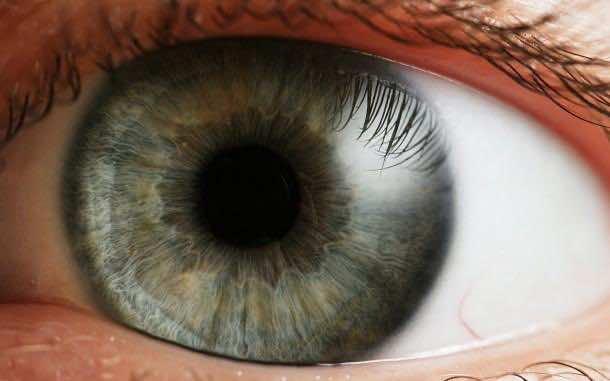 the-human-eye
