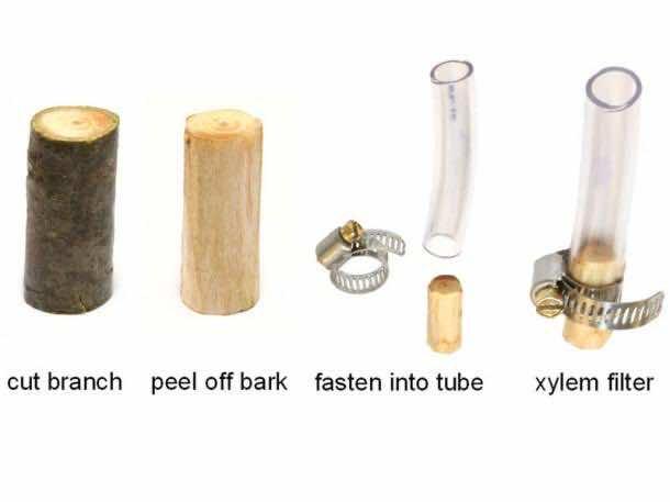tree_water_filter