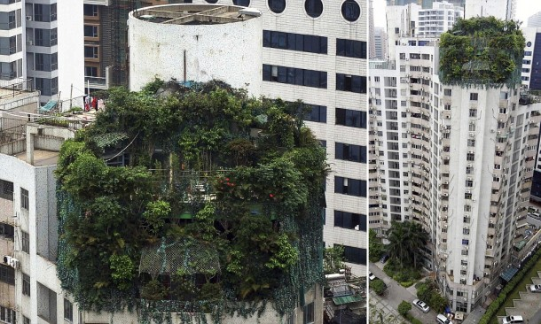 A suspected illegal construction is seen covered by green plants atop a 19-storey residential building in Guangzhou