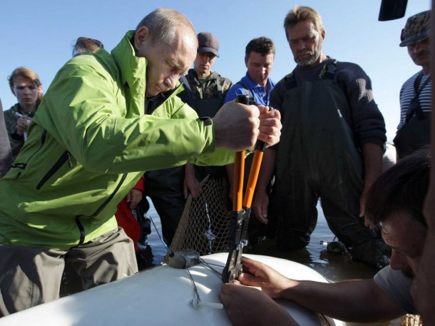 Putin adss a sattelite tracking tag to a Beluga whale