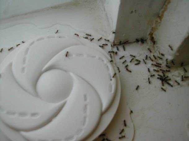 3. Ants