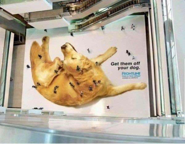 4. Pet Shop