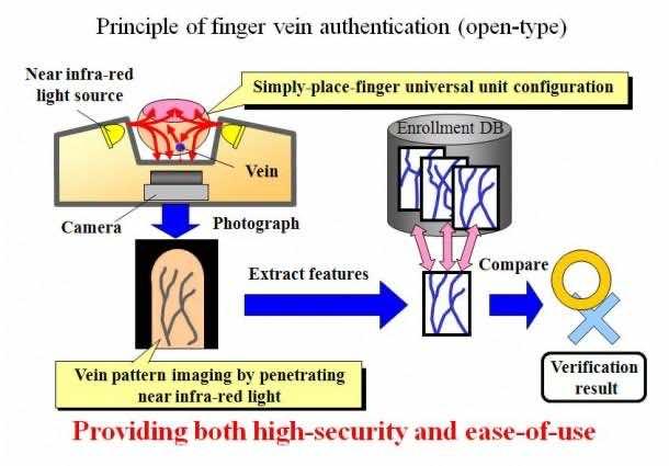 Finger Vein