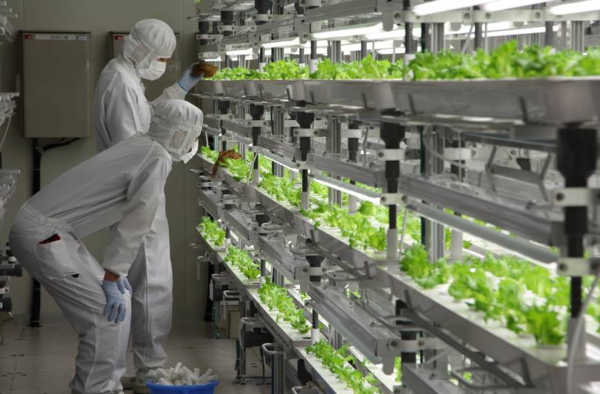 Toshiba Vegetable Factory 4