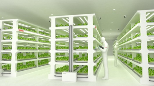 Toshiba Vegetable Factory