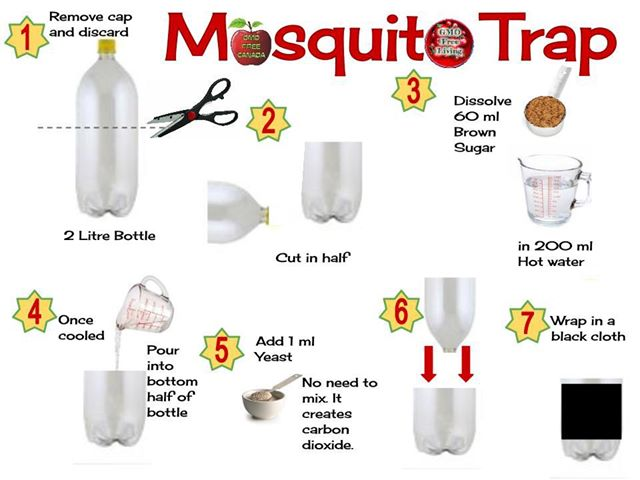 diy mosquito trap get rid of mosquitos at your home with this simple