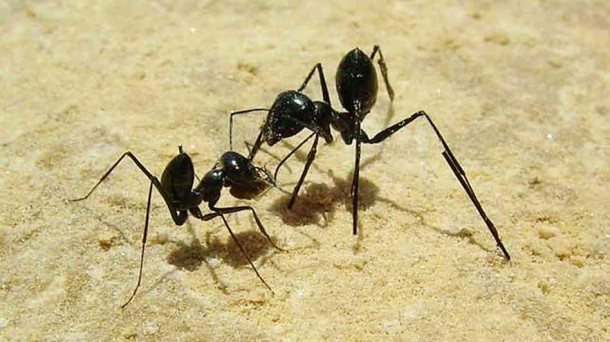 3. Get Rid of Ants