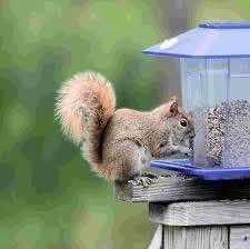 4. Anti-Squirrel