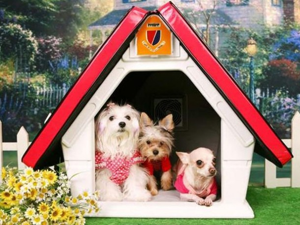 Amazing Doghouses 5