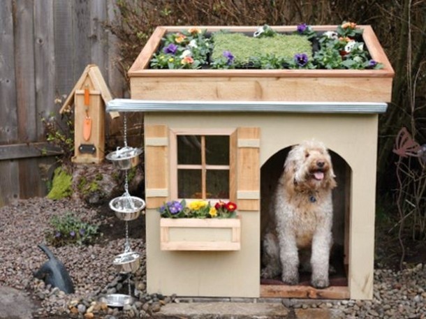 Amazing Doghouses 6