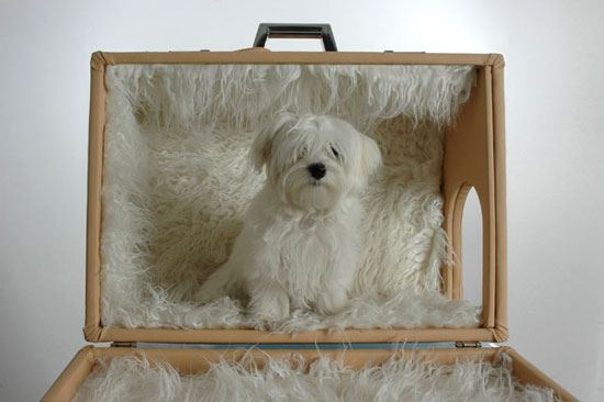 Amazing Doghouses 8