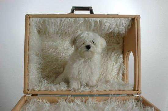 Amazing Doghouses 8