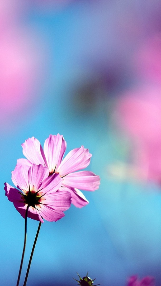 HD Phone Wallpapers pink flower