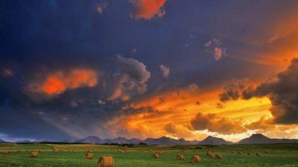 Hay bales in a field, Alberta, Canada