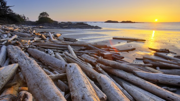 Driftwood on the beach, Pacific Rim National Park Reserve, Vancouver Island, British Columbia, Canada