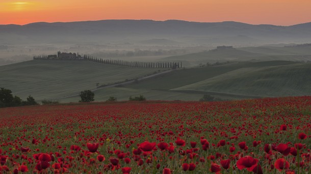 Italy, Tuscany, Crete, View of poppy field in front of farm with cypress trees at sunrise