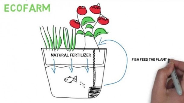 EcoFarm 5