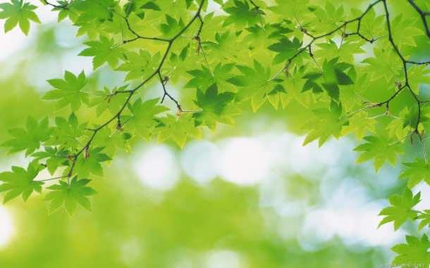 Green Wallpaper 27