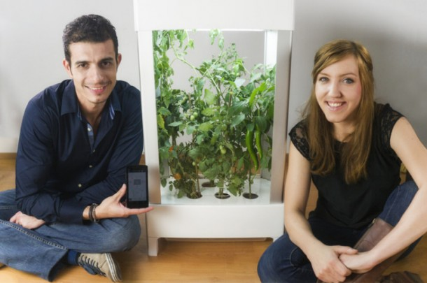 Niwa – Grow Herbs and Fruits inside Your Home