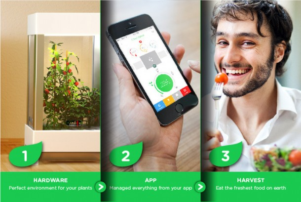 Niwa – Grow Herbs and Fruits inside Your Home4