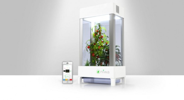 Niwa – Grow Herbs and Fruits inside Your Home5