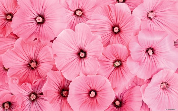 Pink wallpaper 30