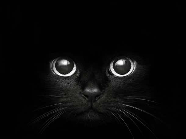 black background 36