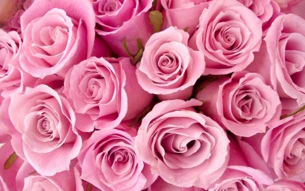pink wallpaper 9