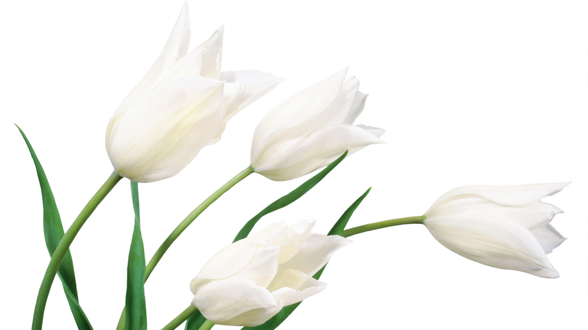 Download 52 Clean White Wallpapers For Desktop Laptops